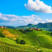 vin-og-gastronomi-i-piemonte
